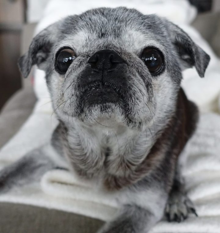 September 30, 2018: Suji Sunday!