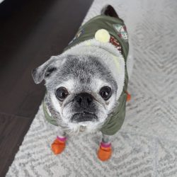 March 3, 2019: Suji Sunday!