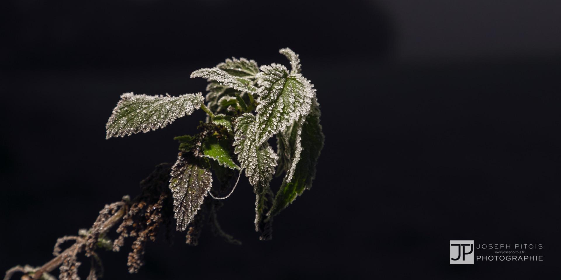 nature-proxy-automne-IMG_5294-2