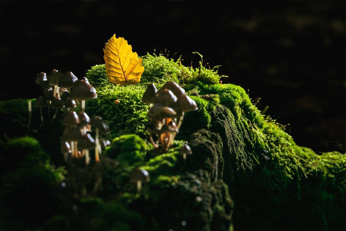 Nature-champignon-foret-automne