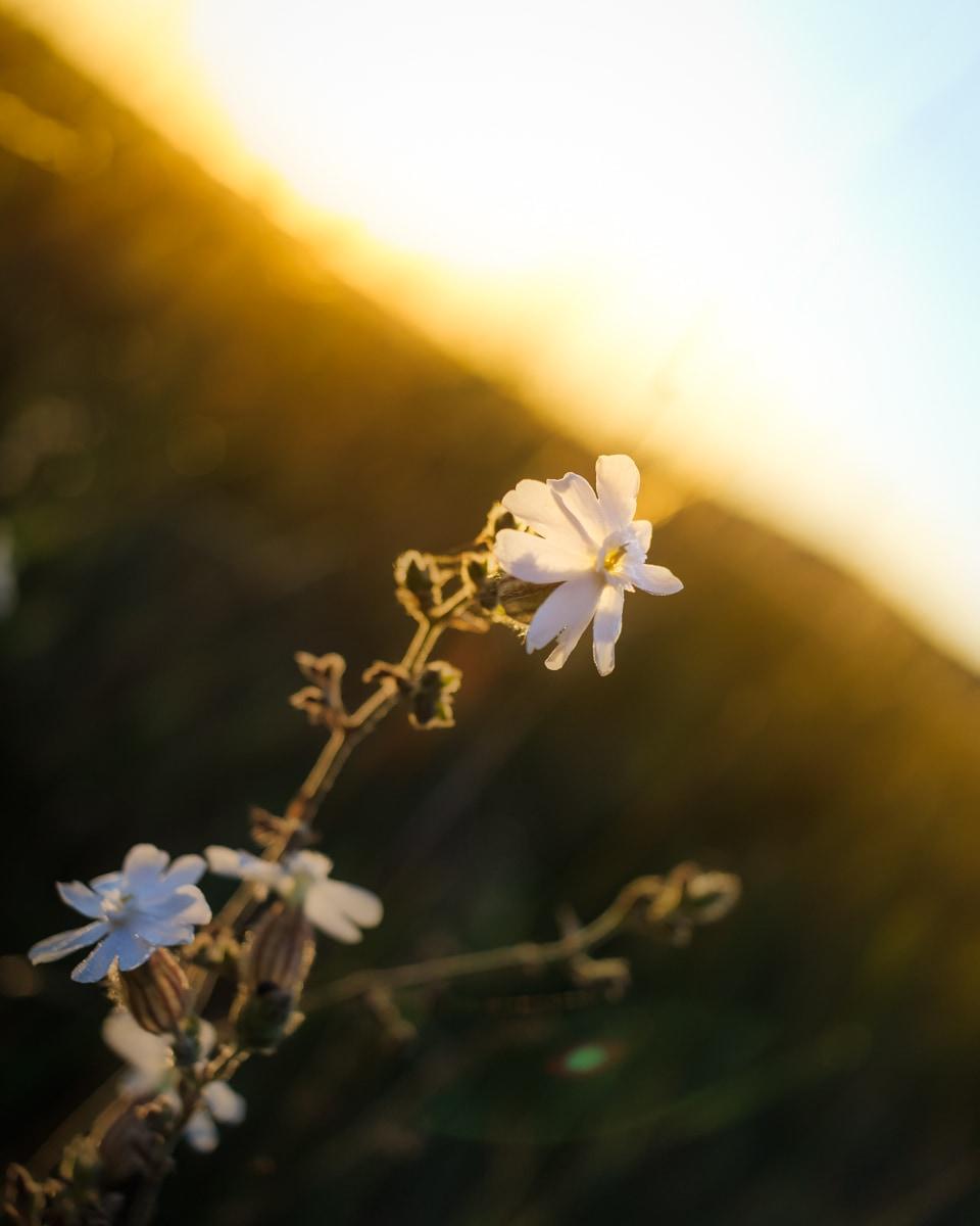 Nature-fleur-ete-3
