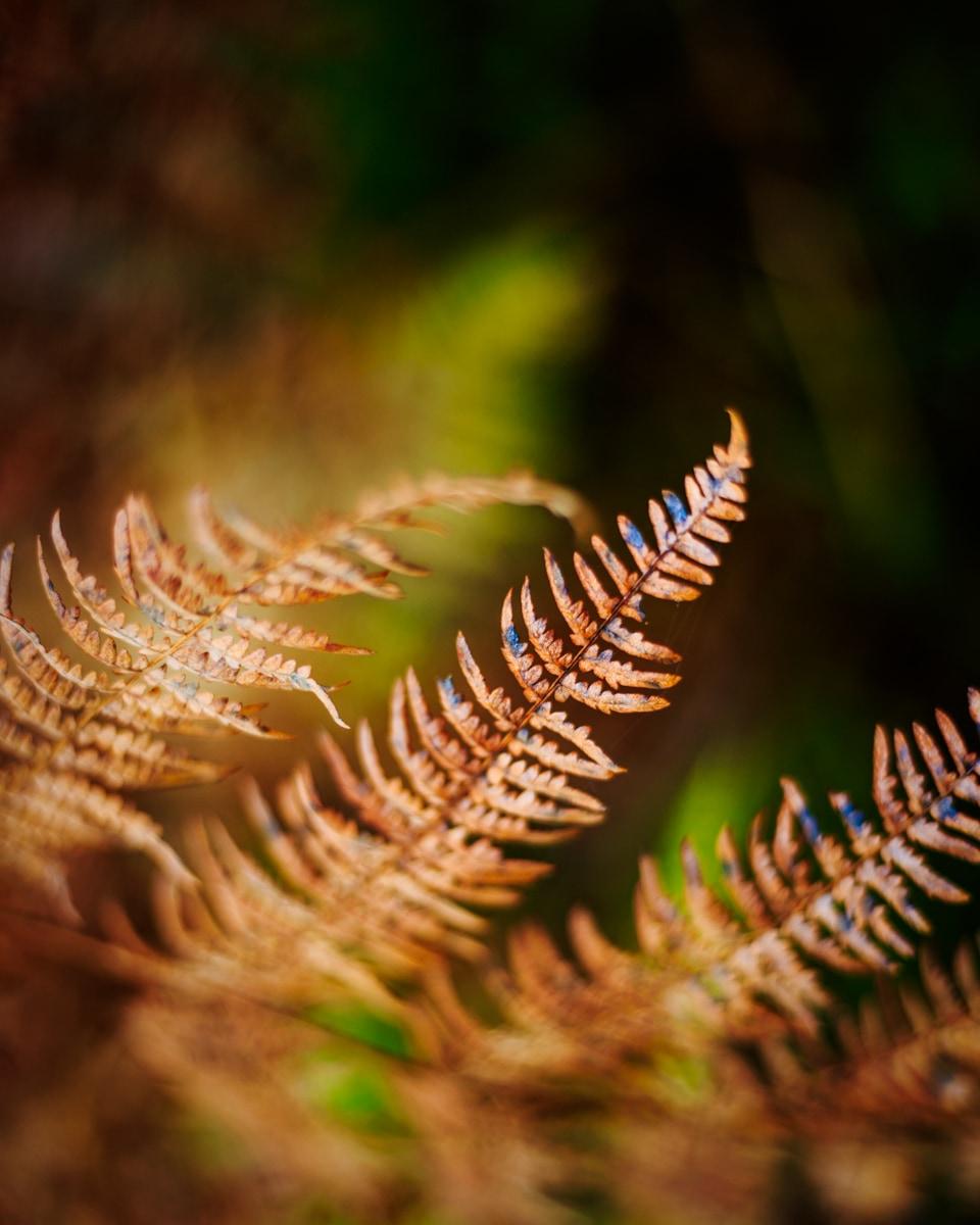 Nature-fougere-automne