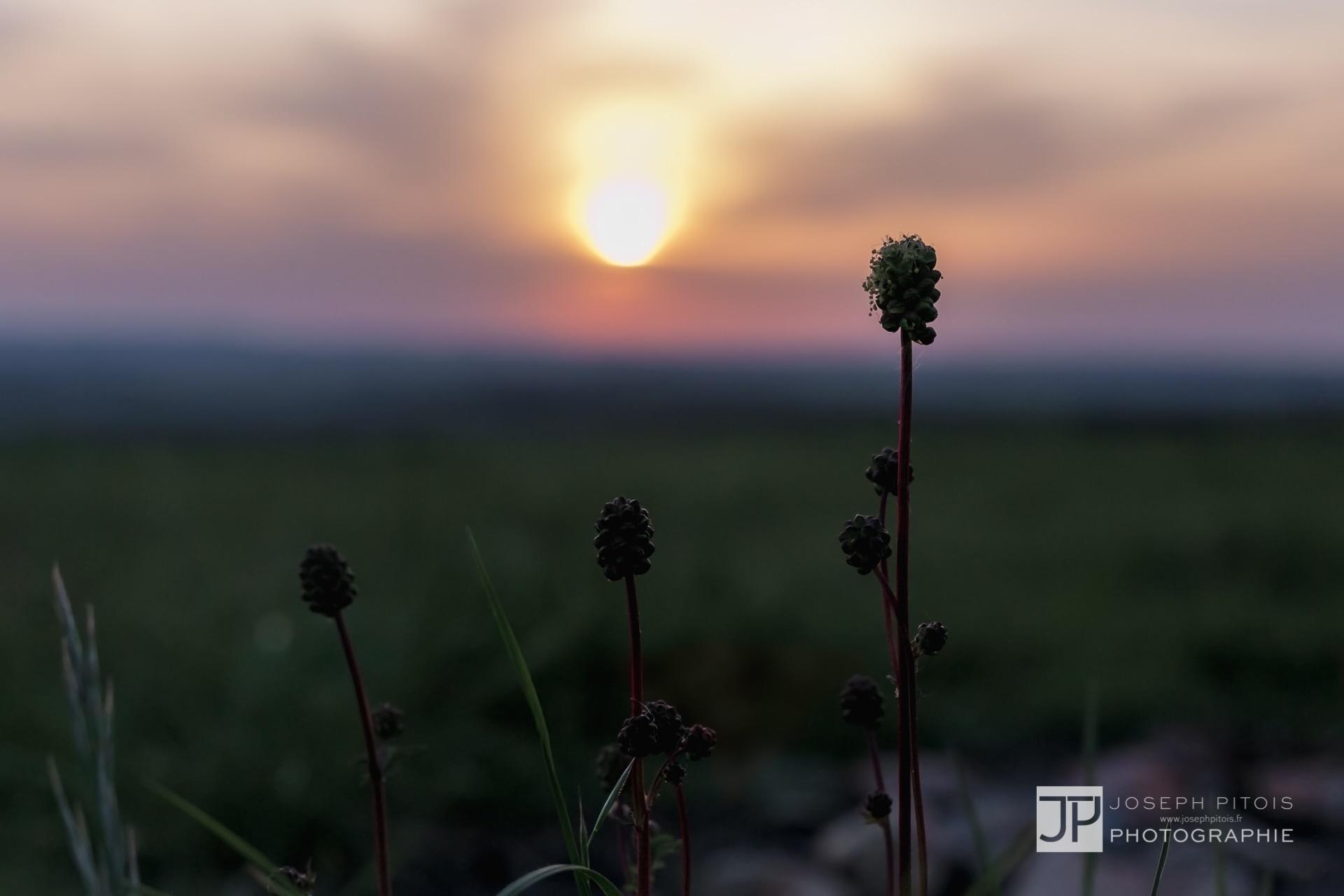 coucher-de-soleil-nature-stromberg-IMG_7734