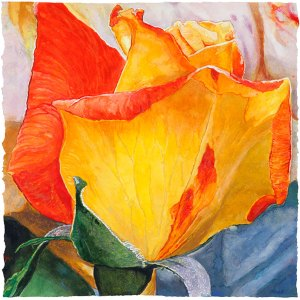 Lannis Rose watercolor on paper 47.6 x 48.3 cm - 18.75 x 19.00 in. 2017