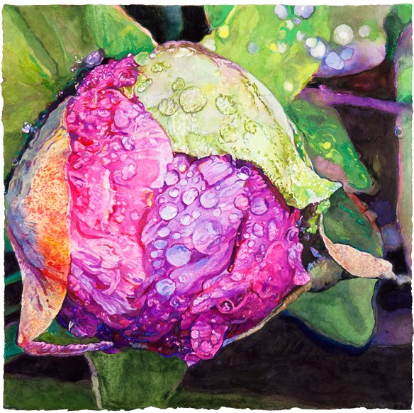 Peony for Reuben watercolor on paper 48.3 x 48.3 cm - 19.00 x 19.00 in.  2017