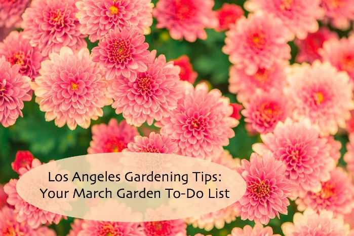 Los Angeles Gardening Tips: March Garden To-Do List