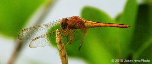 How I tamed my dragonfly