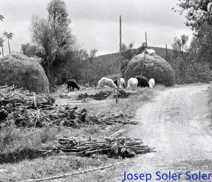 Página 49 de rural libro terminado_new