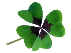 imagen de un trébol de cuatro hojas.