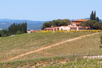 Tuscany - Montalcino, Altesino Vineyard.