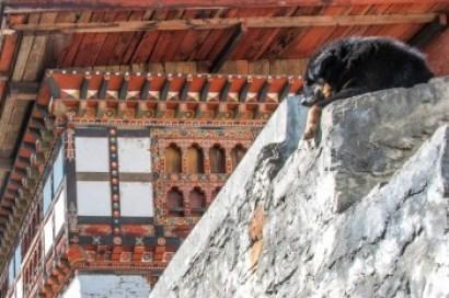 Thumphu Changangkha Monastery.