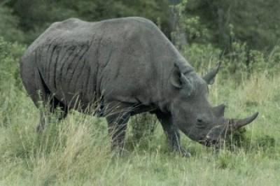 Kenya - Porini Rhino Camp