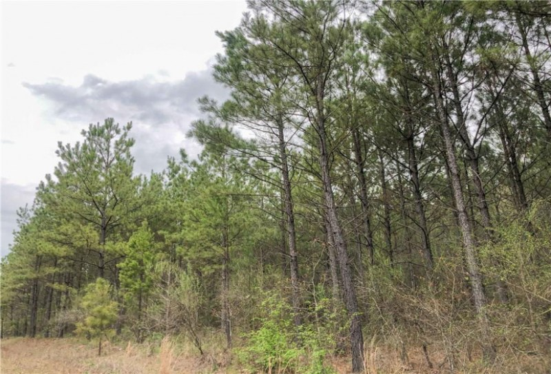 0000 Highway 30, Simms, Texas 75574, ,Lots & Acreage,For Sale,Highway 30,14112739