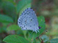 Photo of Summer Azure