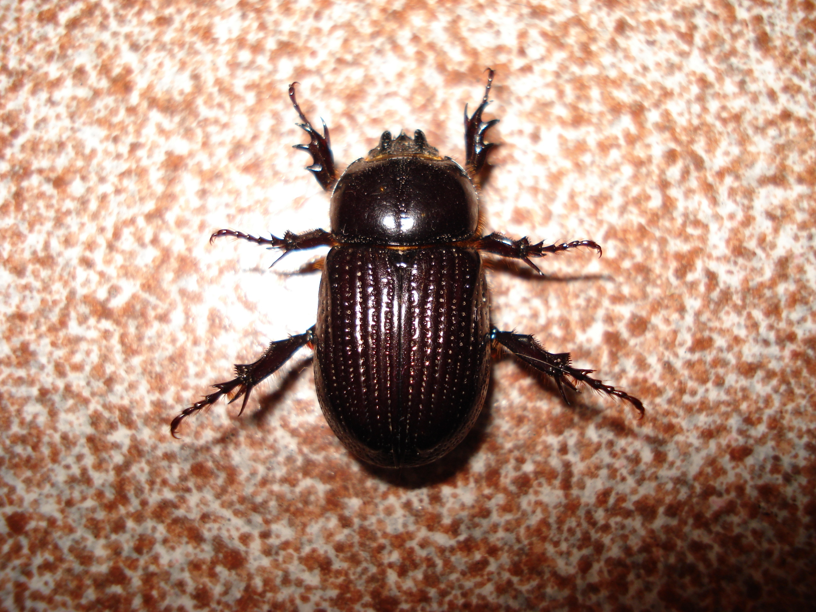 Insect  – by Josh Hatcher #poetrythursday