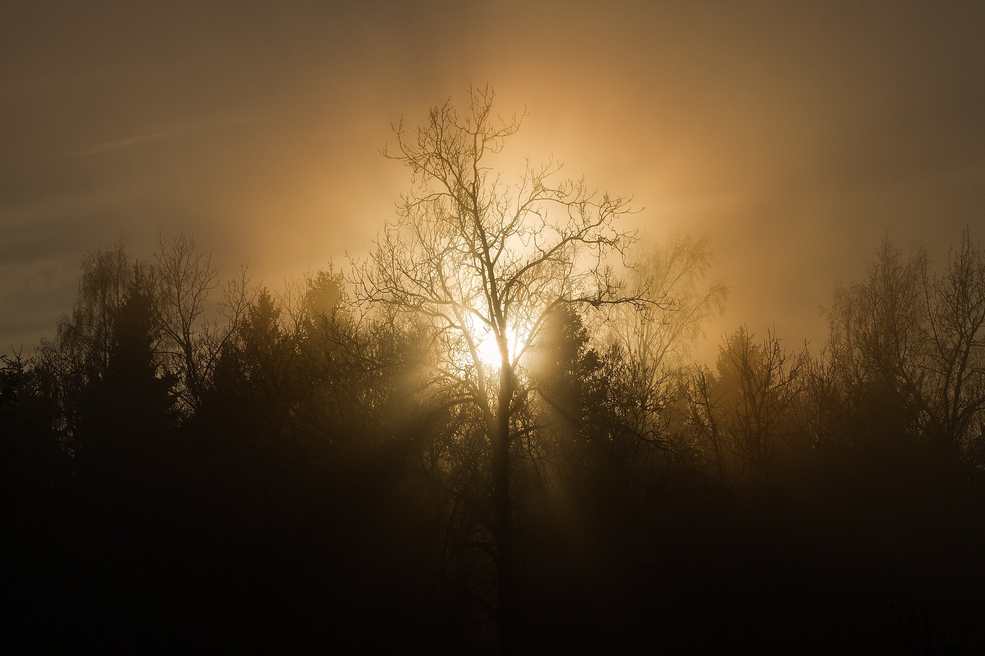 The Sun Shining on a Cool Misty Morning  #poetrythursday