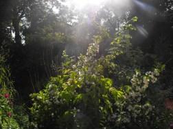 Plant in Garden