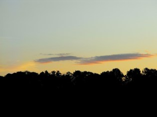 Clouds on the Treeline 1