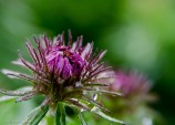Closed Purple Flower