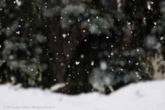 Snow in Front of Trees 2