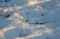 Shadows in the Snow 1