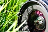Grass Through the Lens