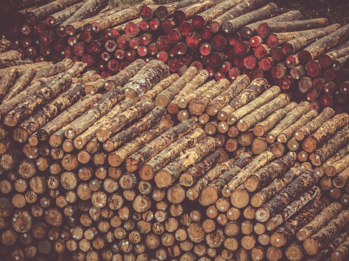multiple-stacks-of-cut-and-stacked-firewood