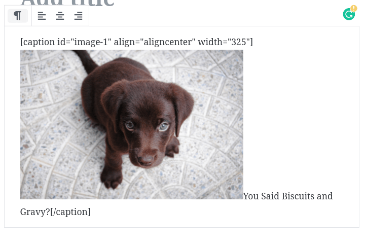 puppy-picture-with-wordpress-shortcode-rendering-problem