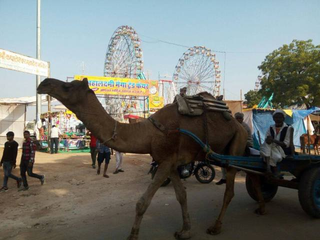 camel-and-fairground