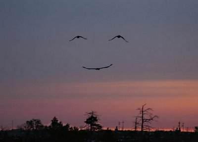 bird face