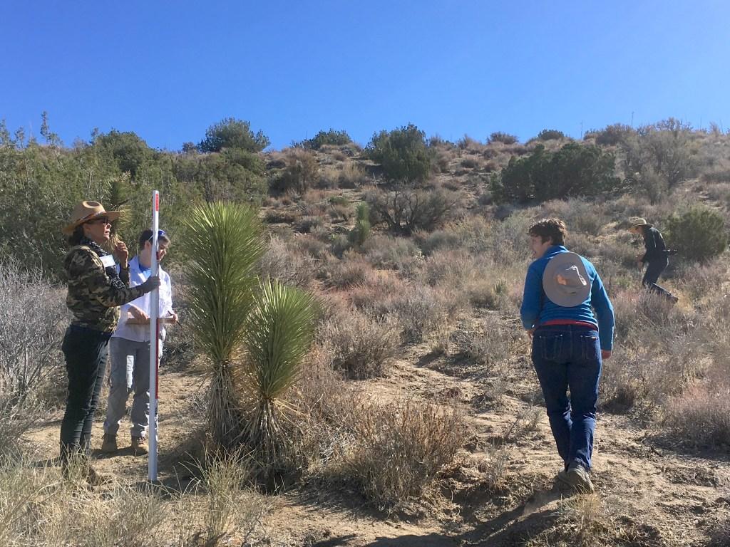 Volunteer leaders measure a Joshua tree. (Photo by Jeremy Yoder.)