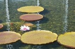 Randoms of 2011 : Lily Pond