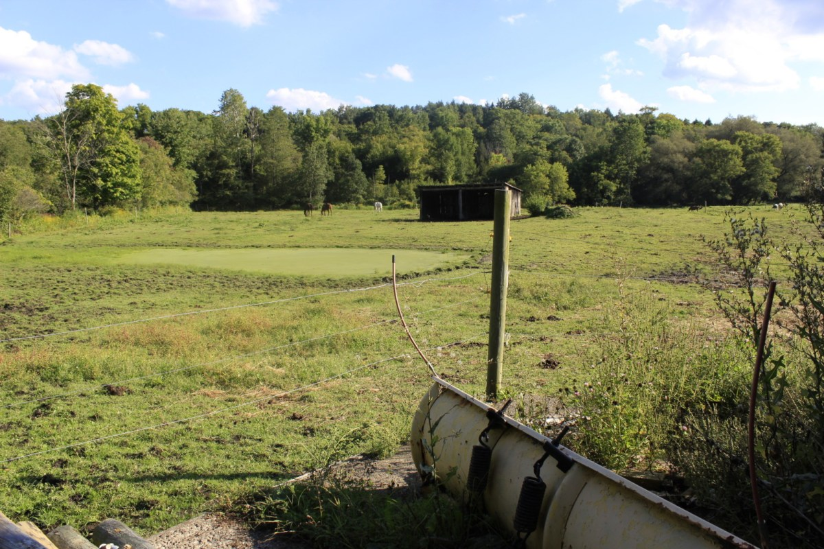 Horse Ranch paddock
