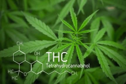 Marijuana, Masturbation, Endocannabinoid