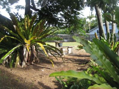 Under Poinciana Tree
