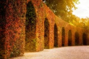 Autumn hedge in Würzburg gardens