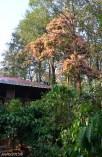 DSC_0303-Jungle Retreat Wayanad