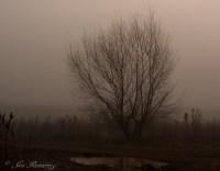 Tree with fog-3