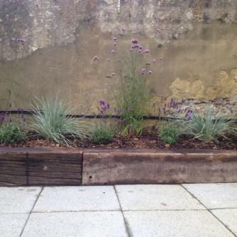 Hove planting design