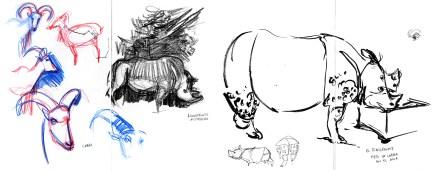 Zoo_Cabra-Rinoceronte