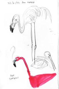 Zoo_Flamingo