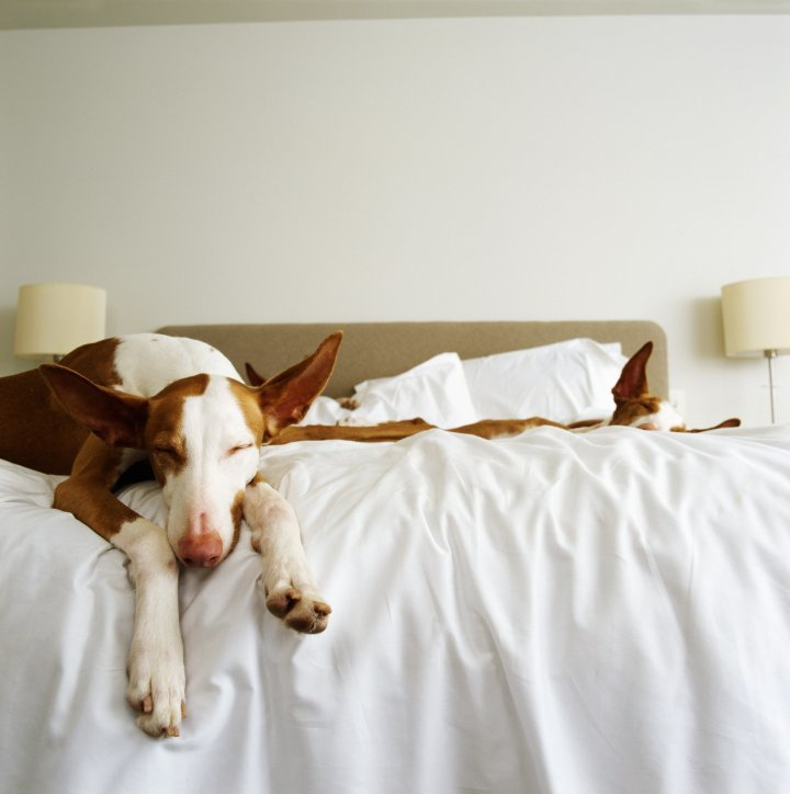 Best Here's Why Sleeping With Your Dog Is Actually Good For You Time Com With Pictures