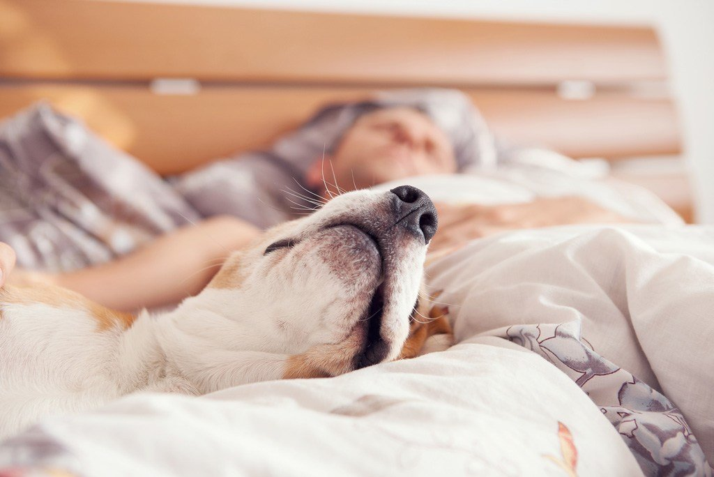 Best Sleeping With Dogs Promotes Better Sleep Vet Practice Magazine With Pictures
