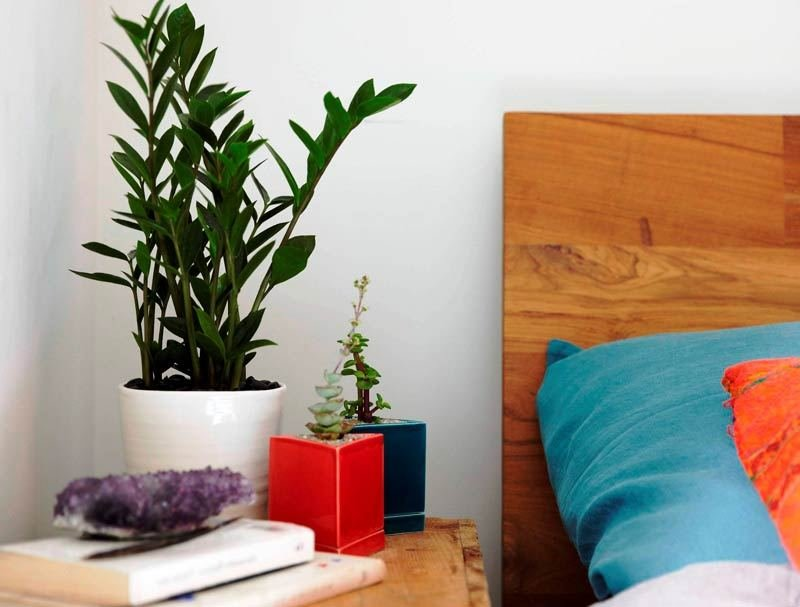 Best Plants That Promote Better Sleep With Pictures