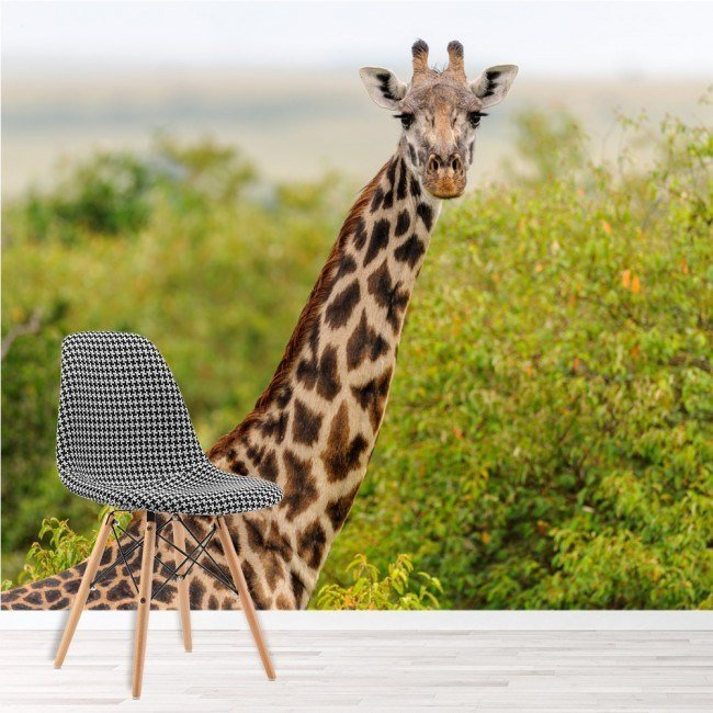 Best Giraffe Wall Mural Safari Animal Wallpaper Kids Bedroom Photo Home Decor With Pictures