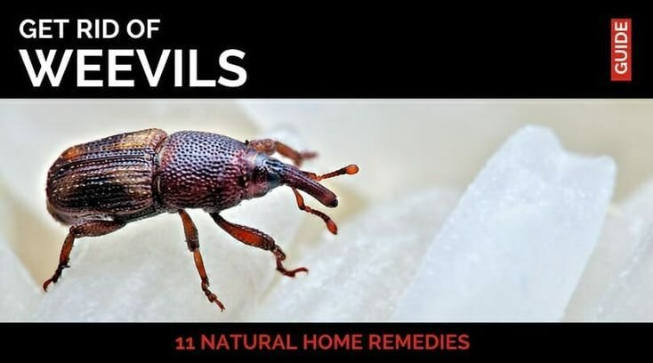 Best 34 Best Pest Control Images On Pinterest Pest Control With Pictures