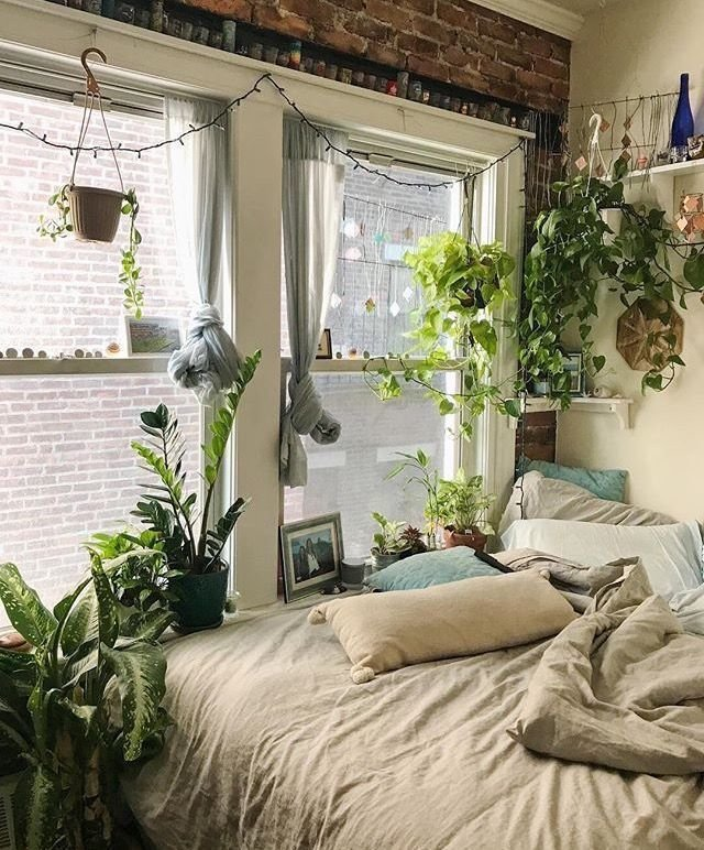 Best 2630 Best Indoor Gardening House Plants Images On With Pictures