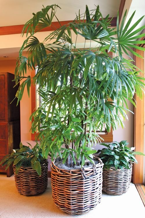 Best Money Corner And Money Associated Plants For Feng Shui With Pictures