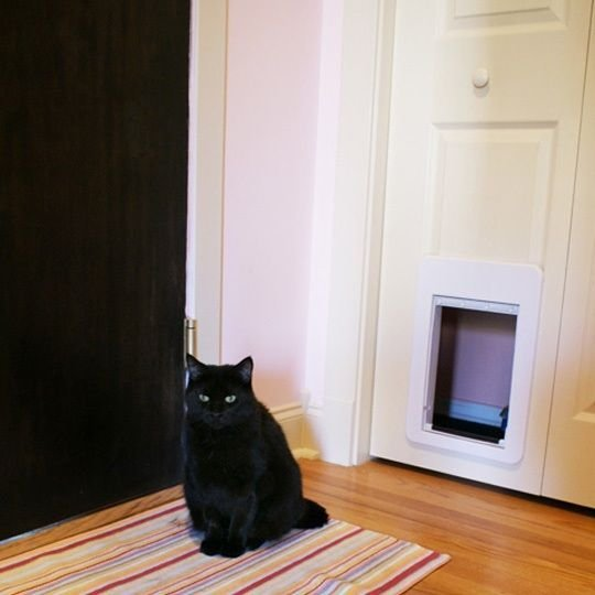 Best Hiding The Litter Box In A Closet For Our Home Design With Pictures