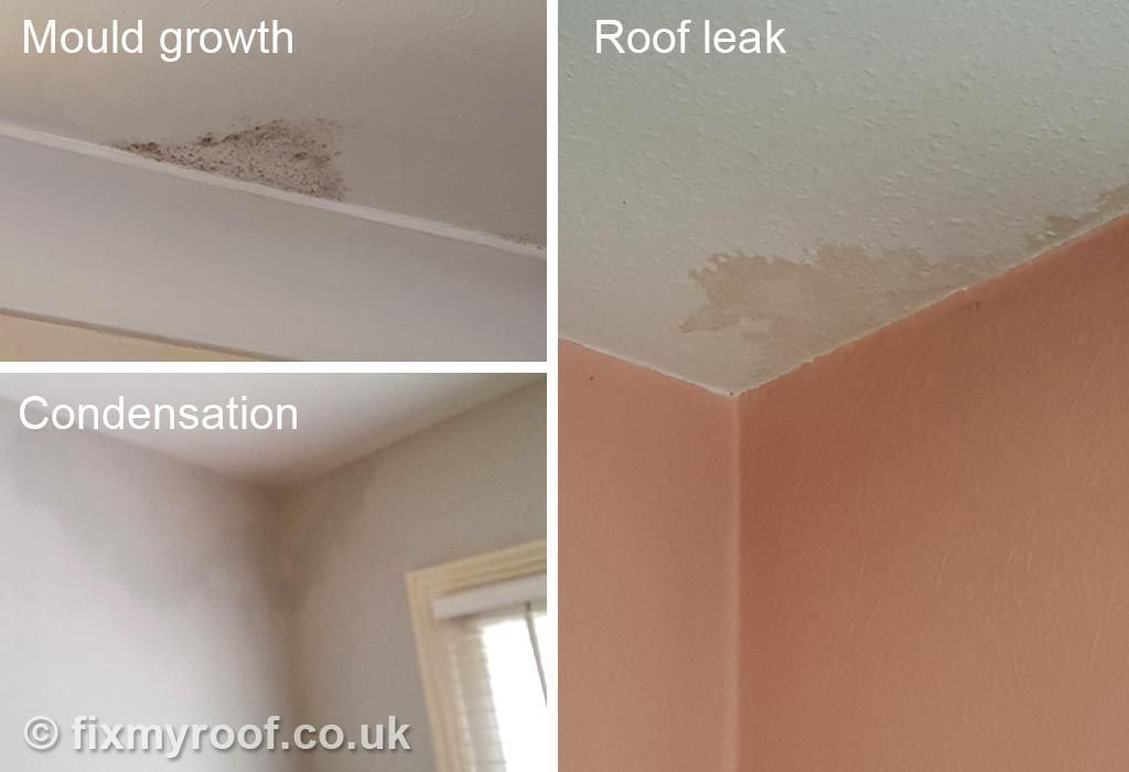 Best Stain On Ceiling Condensation Mould Leak Condensation Get Rid Of Mold Ceiling With Pictures